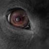 孤狼の血の続編『凶犬の眼』感想文!正義と仁義…貫くべきはどちらか?|柚木裕子